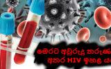 මෙරට අවුරුදු 19-25 තරුණයින් අතර HIV ඉහළ යයි